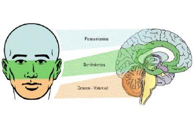 face-brain